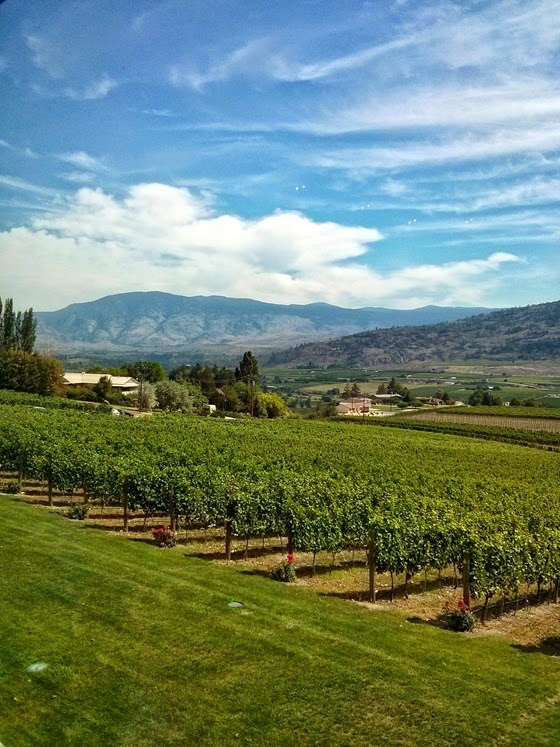 Vineyard views from Road 13 Executive Lounge