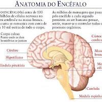 Cerebro alto 2.JPG