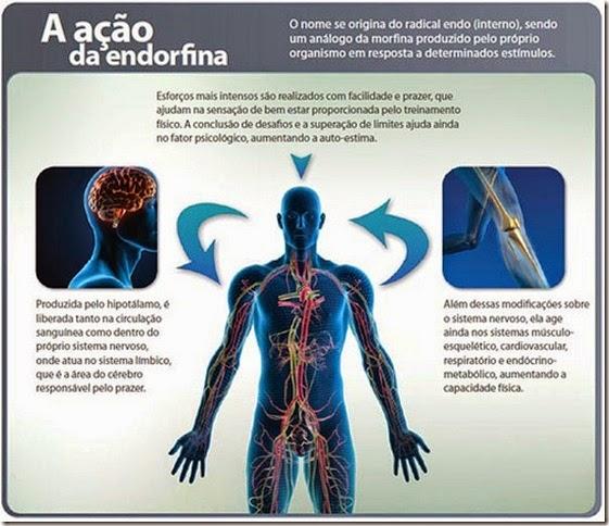 A ação da endorfina