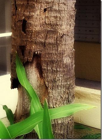 treefinal