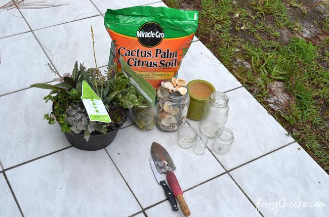 Seashell Succulent Jars
