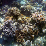 Purples, Yellows, Browns, and Greens - Noumea, New Caledonia