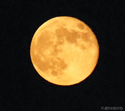 1. full moon-kab
