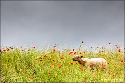 Lac et moutons-4.jpg