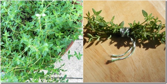 thyme-3