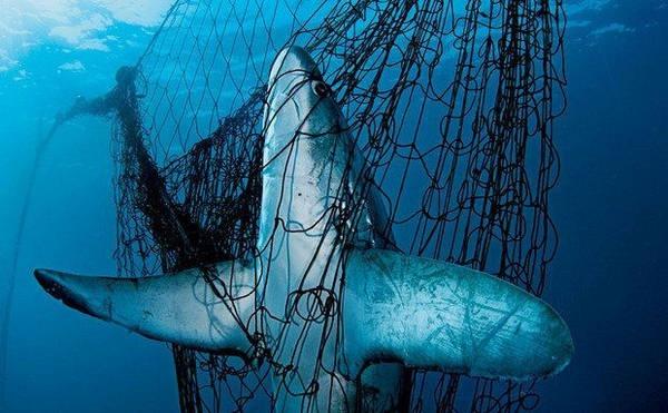 9- Tubarões x pessoas