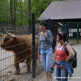Wildpark-PF_2012-04-29_977.JPG
