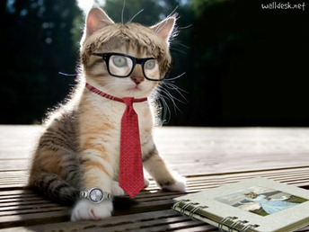 intellectualcat-