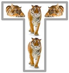 Tt Tiger