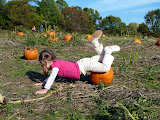 Rolling around in the pumpkin patch at Larriland Farm. (October)