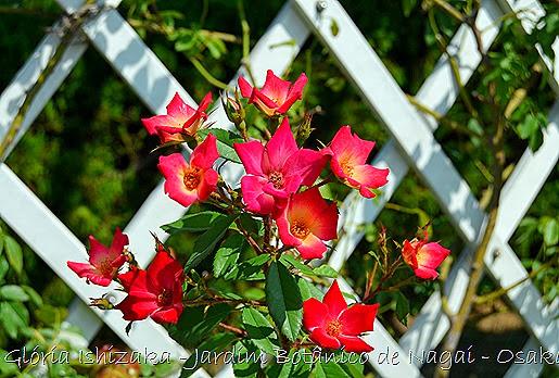 37 - Glória Ishizaka - Jardim Botânico Nagai - Osaka