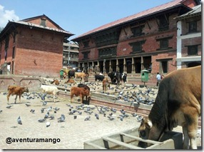 Vacas sagradas Pashupatinah