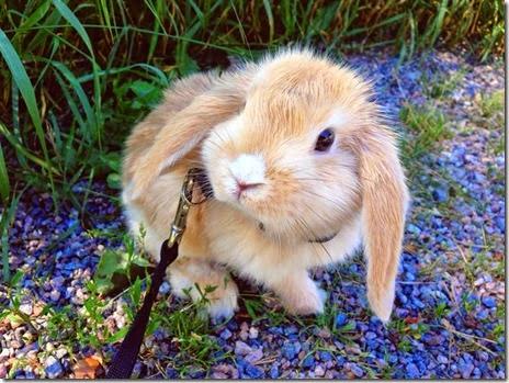 funny-animals-cute-054