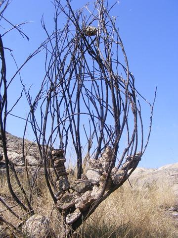 7 ramos 3