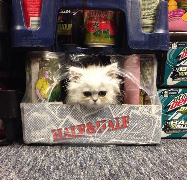 Os gatos não são muito bons em esconde-esconde 21