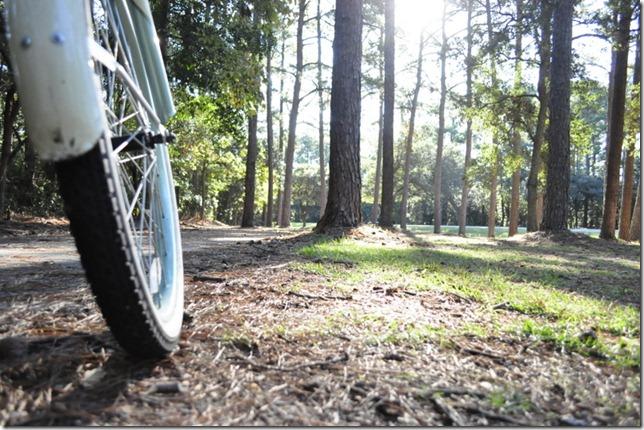 10-3011 bike  woods 245