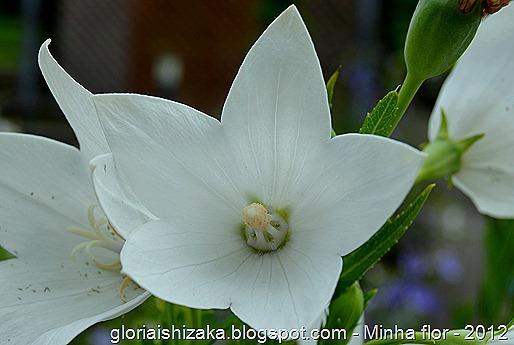 Glória Ishizaka - minhas flores - 2012 - 2