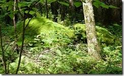 Mossy Rocks-Roaring Forks