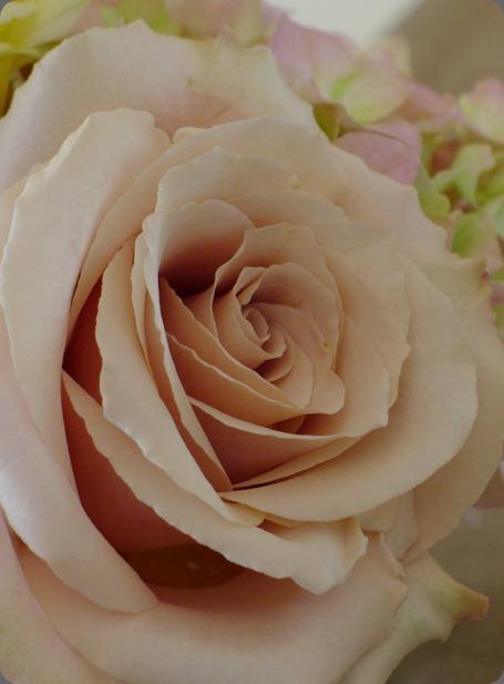 P1010414 quicksand rose flora fauna