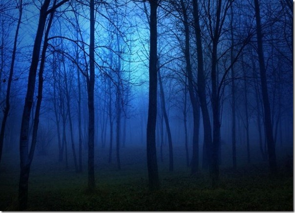 Florestas sombrias (14)