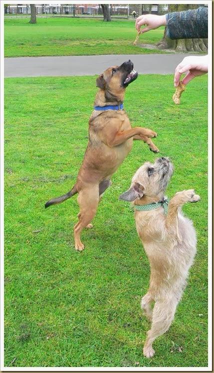 012 - 03 - Charlie & Barney jumping