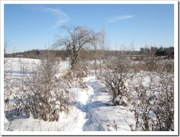 20120114_winter-property_004