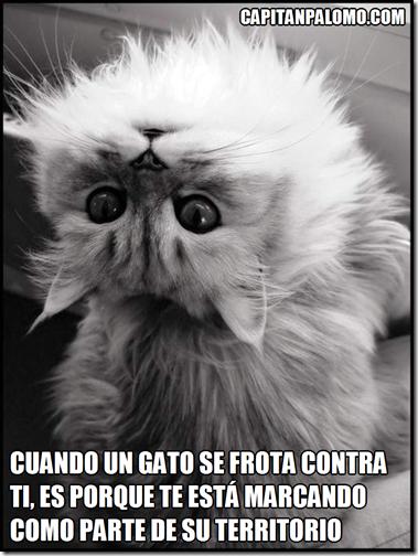 Cuando un gato se frota