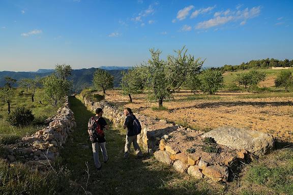 Camí ral de la Morera a Poboleda. Xarxa de camins del Priorat. La Morera de Montsant, Priorat, Tarragona