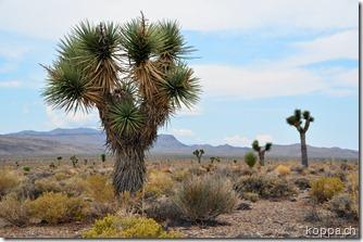 110910 Death Valley (38)