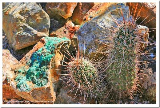 131203_TucsonBotanicalGarden_058