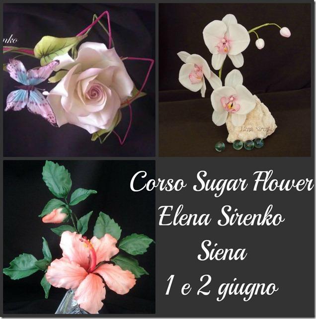 Corsi di Fiori con Elena Sirenko a Siena