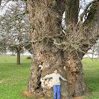 Cei mai batrani copaci din Romania