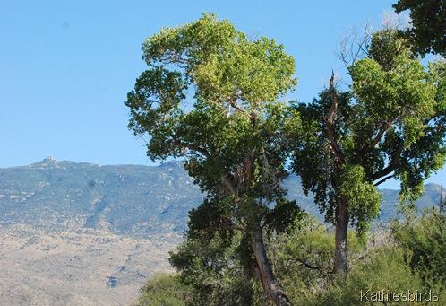 6. trees-kab