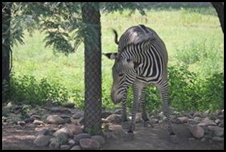 Zoo5 061