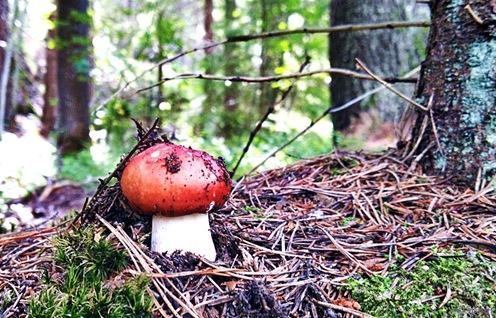 Vilken svamp är detta
