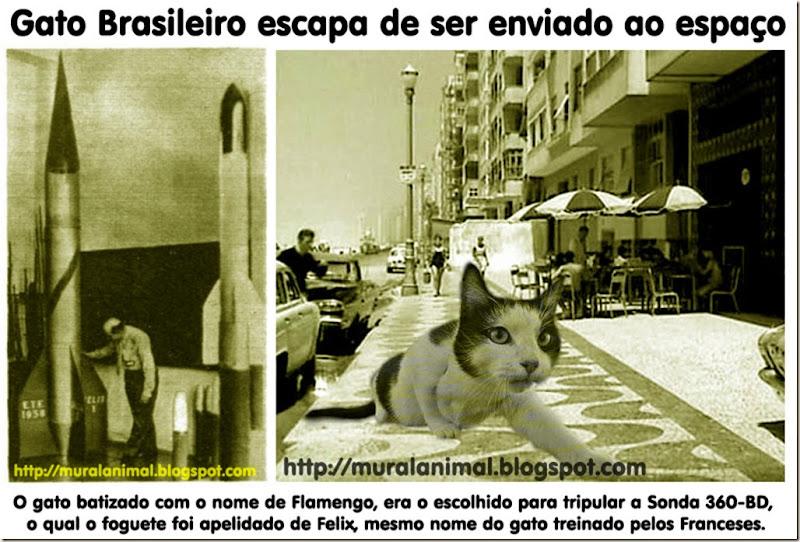 gato-espacial-brasileiro