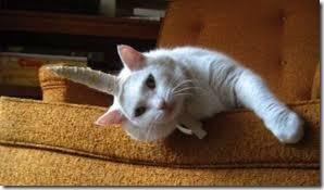 gatos disfrazados de unicornio (3)