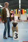 20130511-BMCN-Bullmastiff-Championship-Clubmatch-1643.jpg
