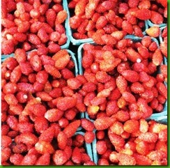 Morango Red Wild Wonder