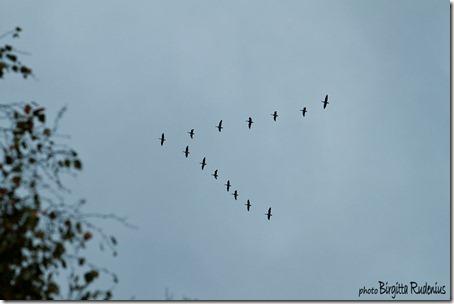 sky_20121007_birds