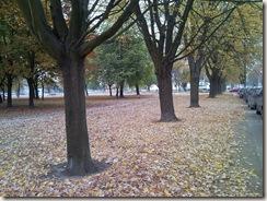 Outono 1