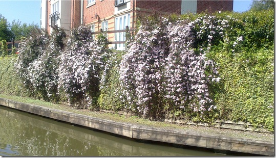 clematis by coventry flats