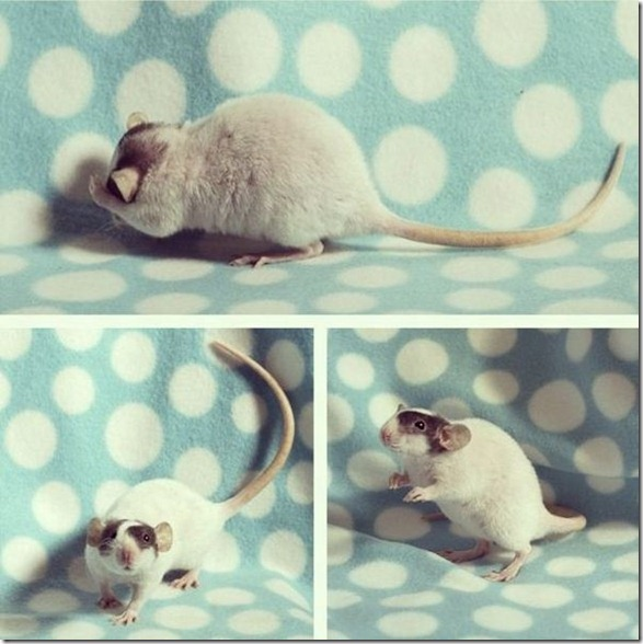 cute-funny-animals-32