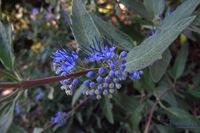 pm_20110831_blue_o