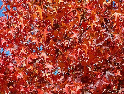 Gloria Ishizaka - Outono - folhas 6