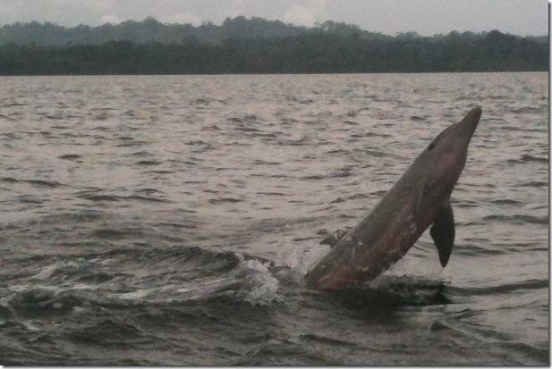 dolphin-3
