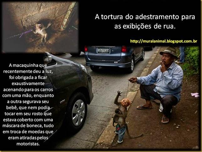 macacos_ruas1