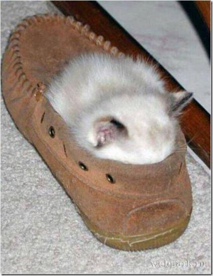 gaots durmiendo en sitios raros (3)