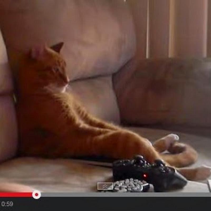 Γάτα παρακολουθεί βίντεο-κλιπ