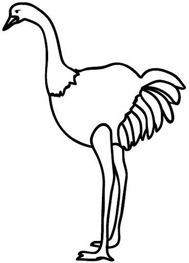 from coloring pages post ostrich coloring pages ostrich to color